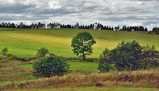 pohled na pole