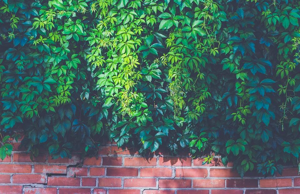 pnoucí rostliny na zdi